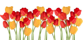Ligne de tulipes images libres de droits