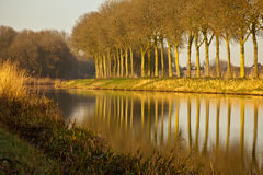 Ligne des arbres Photo stock