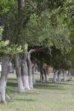 Ligne des arbres Images stock