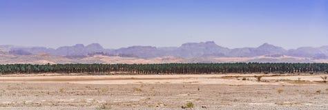 Ligne des arbres Image libre de droits