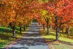 Ligne des arbres d'automne Photo stock