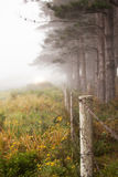 Ligne des arbres dans le brouillard Images libres de droits