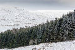 Ligne des arbres de fourrure dans la neige photos stock