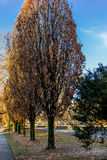 Ligne des arbres en parc à Zurich Photos libres de droits