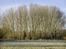Ligne des arbres et une porte au sentier piéton Photos libres de droits