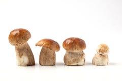 Ligne des champignons de cèpe Photo libre de droits