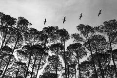 Ligne des oiseaux volant au-dessus d'une plage Images libres de droits