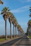 Ligne des palmiers le long du côté une route Photo libre de droits