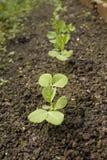 Ligne des plantes plantées de bec d'ancre photo libre de droits