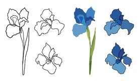 Ligne fleurs d'aspiration de main de vecteur réglées Carte d'iris Conception florale de logo Photos libres de droits