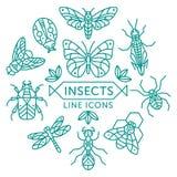 Ligne icônes d'insectes Photo libre de droits