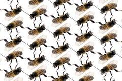 Ligne modèle d'abeille sur le fond blanc Images libres de droits