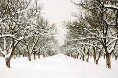 Ligne par le verger de l'hiver photo libre de droits