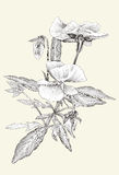 Ligne simplicité et beauté de fleur d'art Photos libres de droits