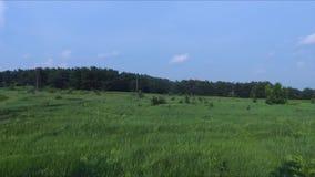 Lignes électriques dans la nature sur la montagne clips vidéos