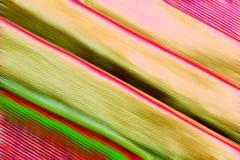 Lignes abstraites diagonales colorées Photos libres de droits