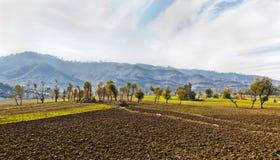 Lignes d'agriculture de l'Himalaya Photographie stock