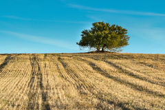 Lignes d'arbre Image libre de droits