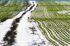 Lignes de blé et de la route qui s'étendent à l'horizon Photo libre de droits