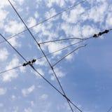 Lignes de câble de l'électricité de trolleybus de chariot image stock