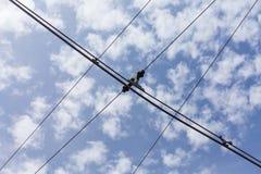 Lignes de câble de l'électricité de trolleybus de chariot photo libre de droits