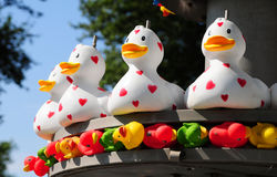 Lignes de canard Photos libres de droits