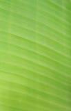 Lignes de feuille de banane Images stock