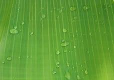 Lignes de feuille de banane Photographie stock libre de droits