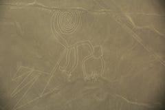 Lignes de Nazca, le singe Photos stock