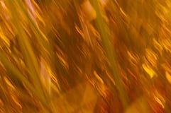 Lignes de tache floue d'herbe avec des oranges et des jaunes Photographie stock