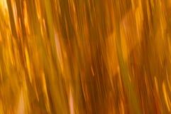 Lignes de tache floue d'herbe avec des oranges et des jaunes Photographie stock libre de droits