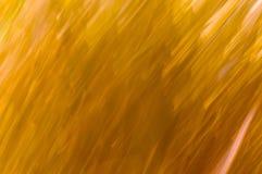 Lignes de tache floue d'herbe avec des oranges et le jaune Image libre de droits