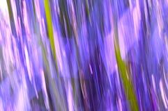 Lignes de tache floue d'herbe avec des pourpres et des roses Image stock