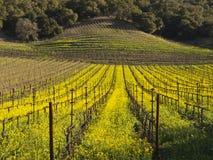 Lignes de vigne dans le Napa Valley images stock