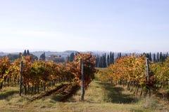 Lignes de Wineyards Photos stock