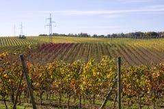 Lignes de Wineyards Images stock