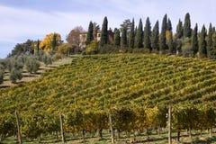 Lignes de Wineyards Photo libre de droits