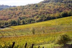 Lignes de Wineyards Photo stock