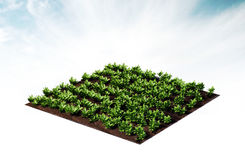 Lignes des légumes Image libre de droits
