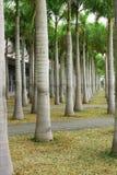 Lignes des palmiers photo stock