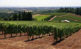 Lignes des vignes Photos stock