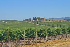 Lignes des vignes et des côtes de la Toscane en Italie photo stock