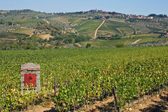Lignes des vignes et des côtes de la Toscane en Italie images stock