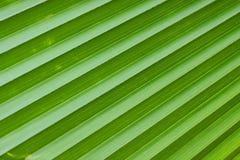 Lignes diagonales de palmette verte Image libre de droits