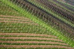 Lignes diagonales des vignobles au printemps à la lumière du soleil sud photos libres de droits