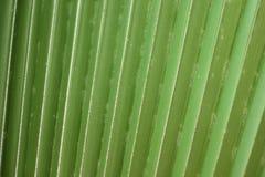 Lignes et texture de palmette verte Image stock
