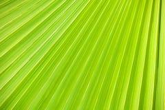 Lignes et textures de paume verte Photographie stock libre de droits