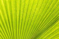 Lignes et textures de paume verte Image libre de droits
