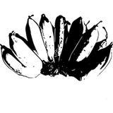 Lignes noires et blanches de banane photos libres de droits