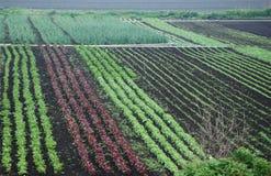 Lignes végétales colorées Photo stock